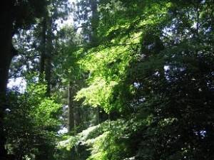 箱根神社の深い森に木漏れ日がまぶしく感じられます