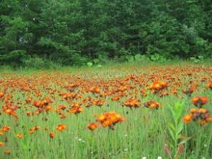 中標津のラ・レトリの名前の分からない花たち