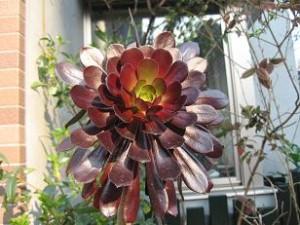 ご近所の珍しい花